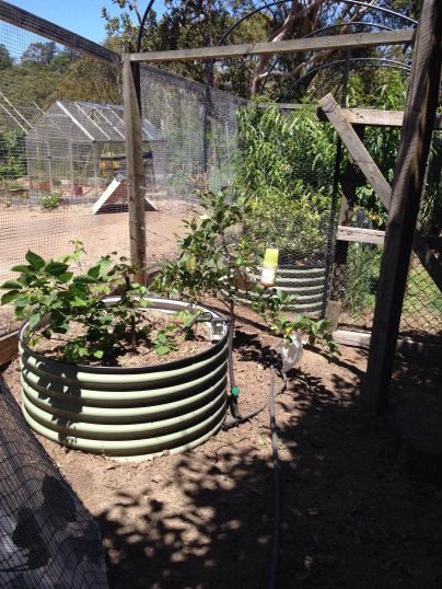 Ad hoc gate and fence to keep seed bed safe.
