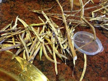 Broccoli seed husks