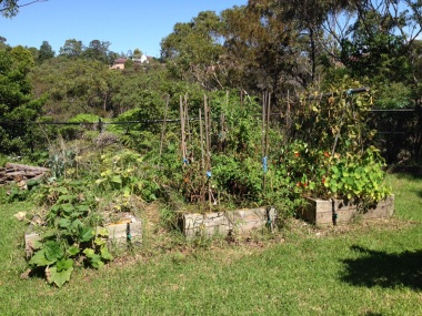 Cucurbits, Tomatoes and Legumes beds