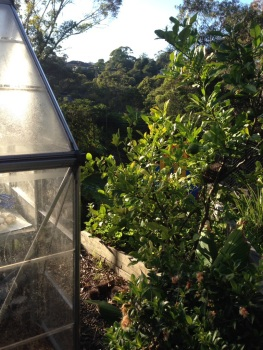 Greenhouse in the morning light