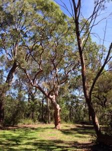 Beautiful twisty tree