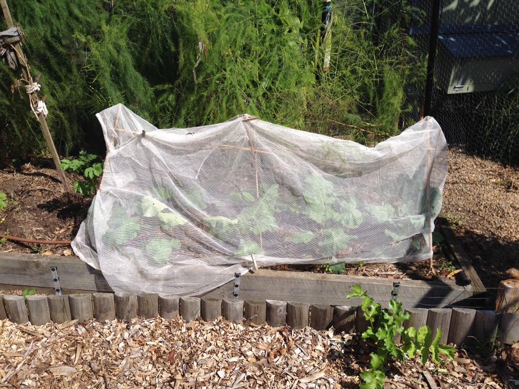Vege net on broccoli crops