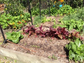 Vegetables growing on