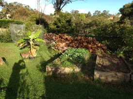 Young broccoli and green manure in vegetable bed
