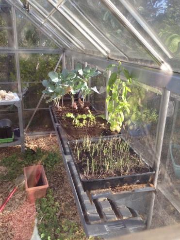 Seedlings in the greenhouse