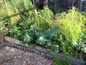 Broccoli and potato plants growing