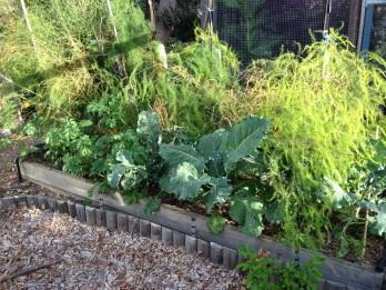 Broccoli and potato plants growing