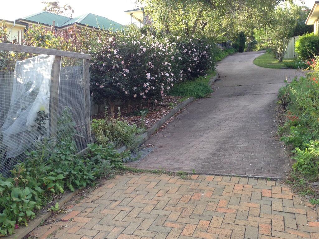 Flowering camellias