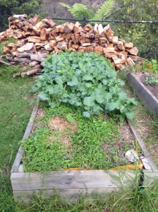The broccoli is at the back, clover at the front.