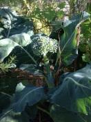 Another yummy looking broccoli head