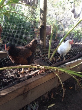 Harriet and Matilda show off their new feathers