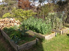 Three raised vegetable beds