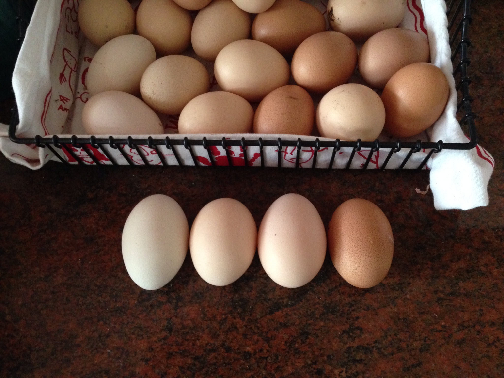 Fresh laid chicken eggs from all four chooks