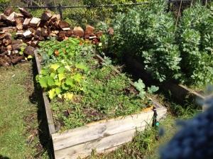 Fallow garden bed