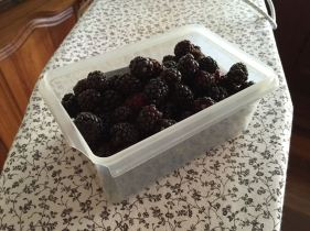 Boysenberries by the tub!