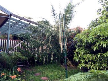 Before pruning