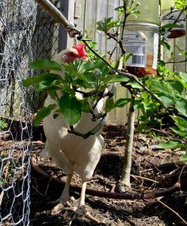 Matilda plays peekaboo behind an apple tree.
