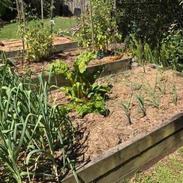 October: garlic at left